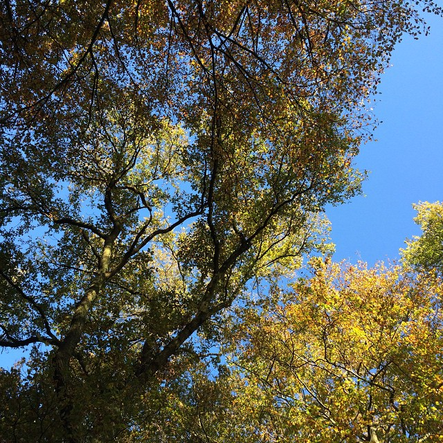 Look up to the autumn colors