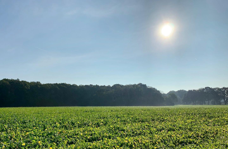 Little morning walk
