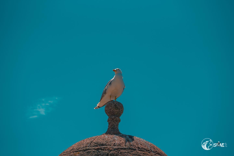 Gull #nikond750📸