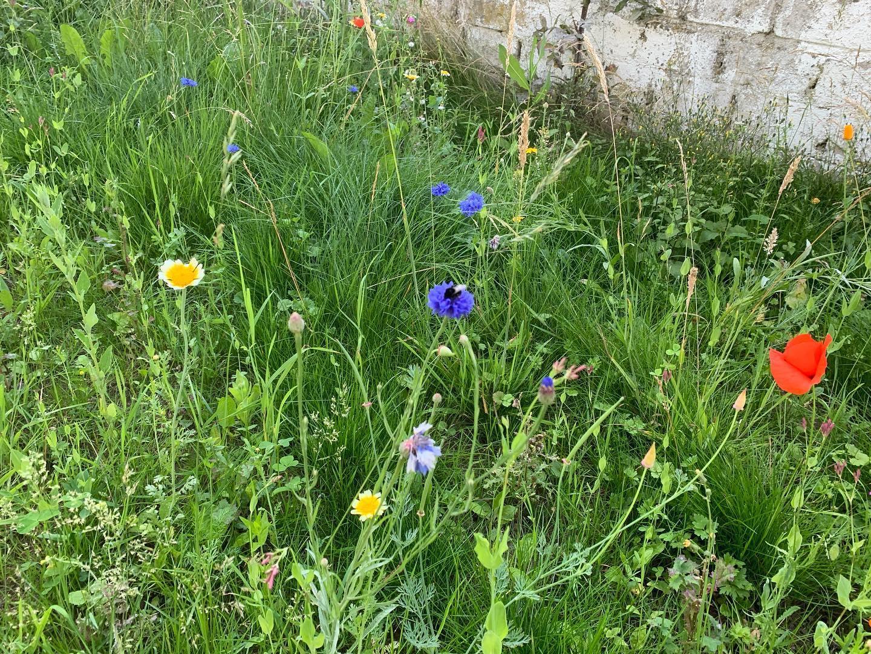 Flower meadow project successful