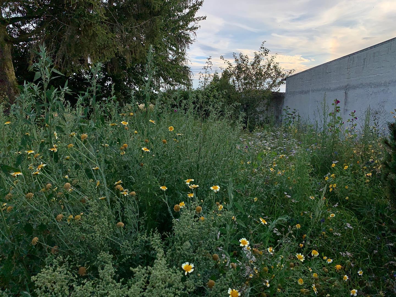 Unserer Blumenwiese geht es gut