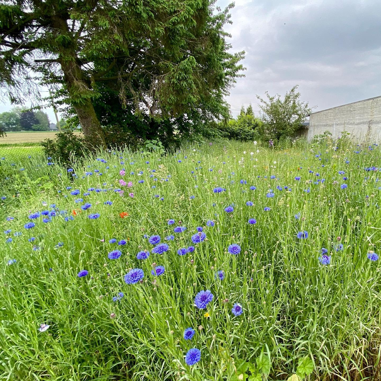Unsere Blumenwiese - Action im Garten