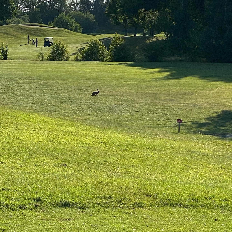 Rabbit @golfclub_wildenrath_e.v